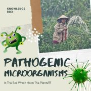 Pathogenic Microorganisms